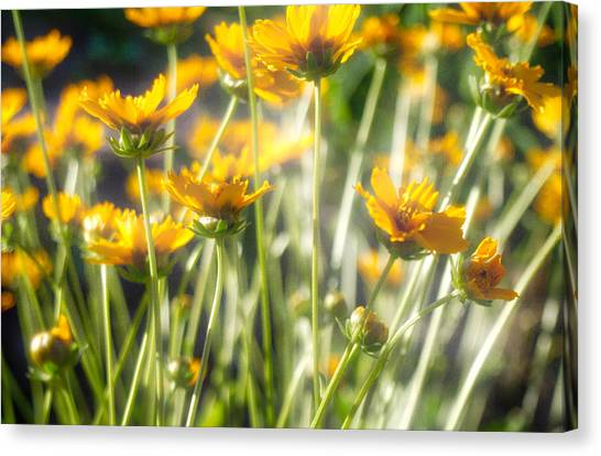 Explosion Of Yellow Canvas Print