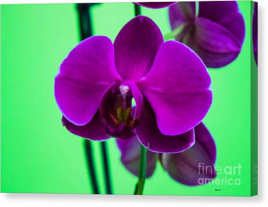 Exposed Orchid Canvas Print by Roberta Byram