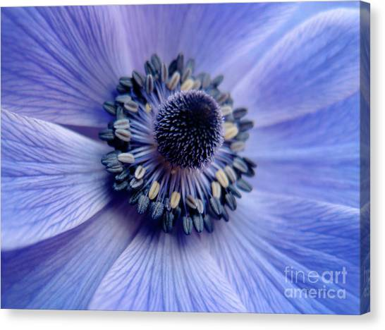 Expressive Blue And Purple Floral Macro Photo 706 Canvas Print