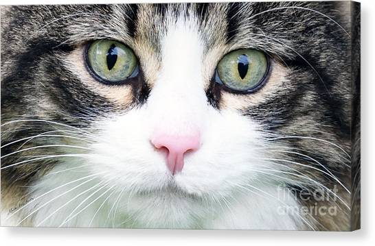 Canvas Print featuring the painting Expressive Maine Coon D122016 by Mas Art Studio