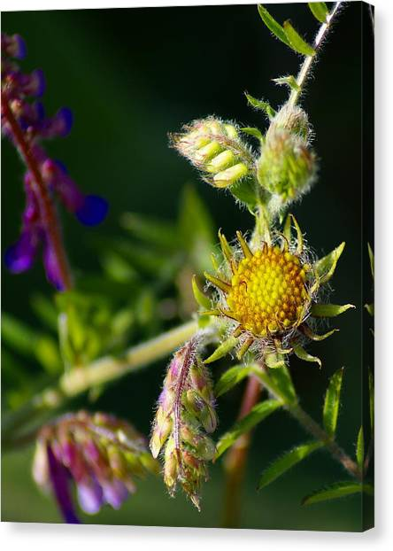 Eye Candy From The Garden Canvas Print
