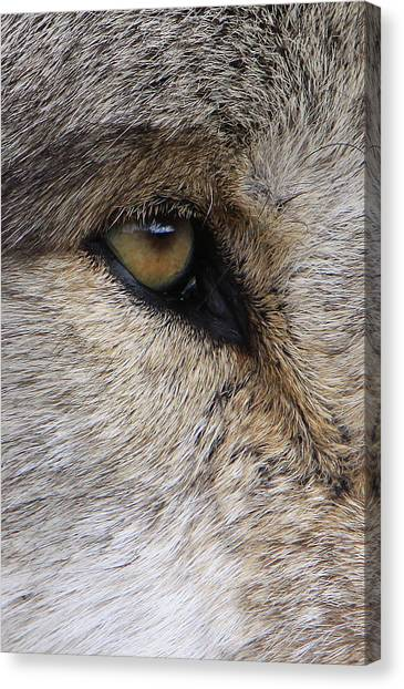 Eye Catcher Canvas Print