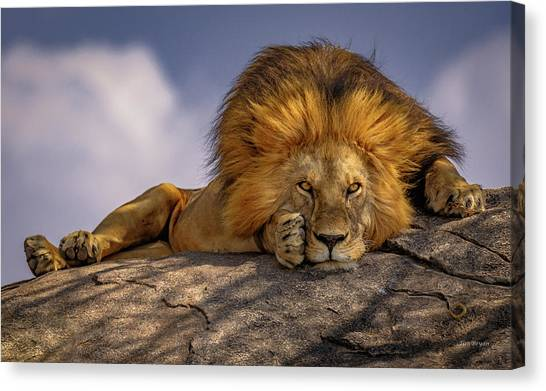 Eye Contact On The Serengeti Canvas Print