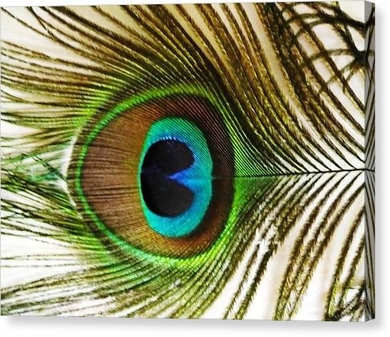 Eye Of Peacock Canvas Print