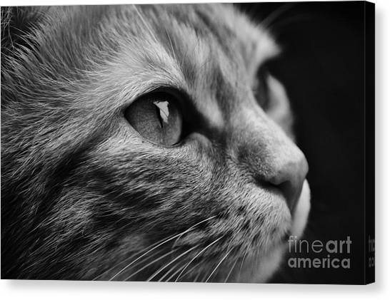Eye Of The Cat Canvas Print