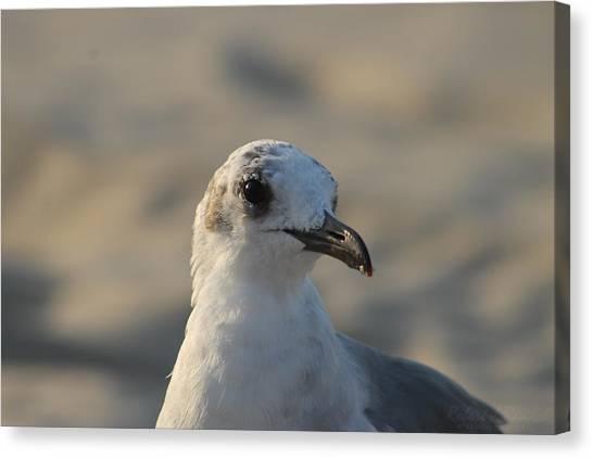 Eye Of The Gull Canvas Print