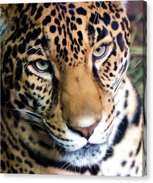 Eye Of The Leopard Canvas Print