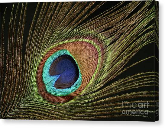 Eye Of The Peacock #11 Canvas Print