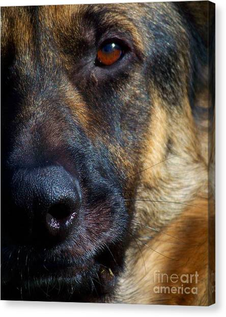Eye Of The Shepherd Canvas Print