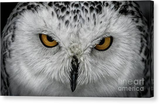 Canvas Print featuring the photograph Eye-to-eye by Brad Allen Fine Art