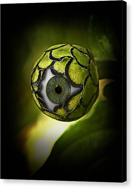 Seer Canvas Print - Eye Will See You In The Garden by Gravityx9 Designs