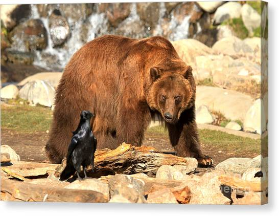 Bear Claws Canvas Print - Eyeing Each Other by Adam Jewell
