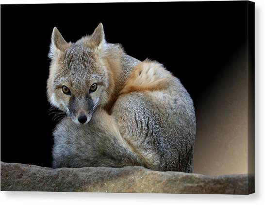 Eyes Of The Fox Canvas Print
