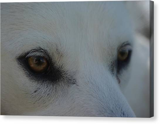 Eyes Of The Wolf - In Her Eyes Canvas Print
