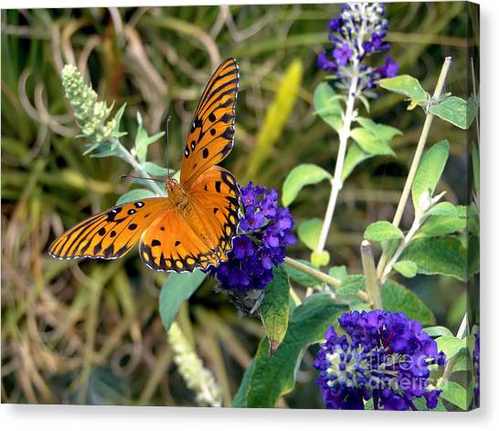 Eyes On A Butterfly Canvas Print