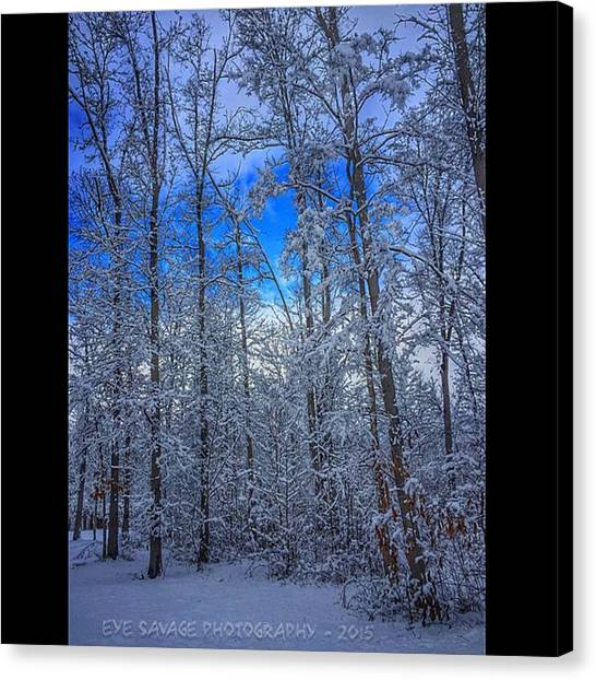 Snowball Canvas Print - #eyesavagephotography #iphone by D Gillwood
