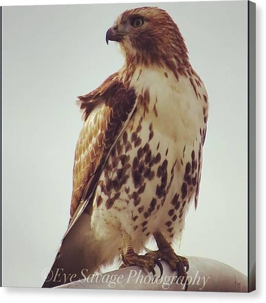 Hawks Canvas Print - #eyesavagephotography #michigan #nature by Derrick Gillwood