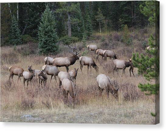 Faabullelk111rmnp Canvas Print