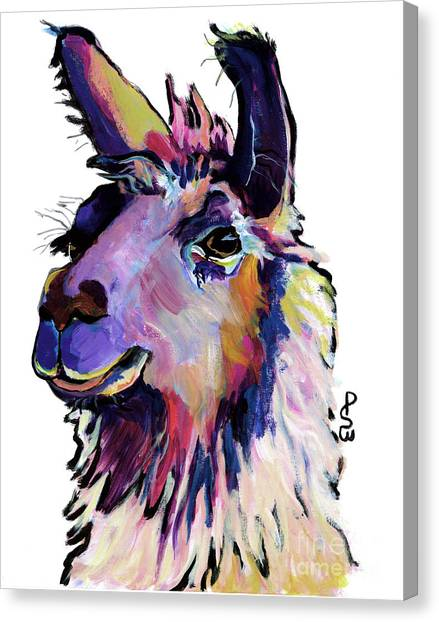 Llamas Canvas Print - Fabio by Pat Saunders-White