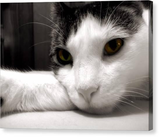 Fabulous Feline Canvas Print