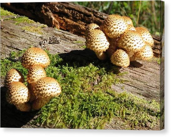 Fabulus Fungi Canvas Print