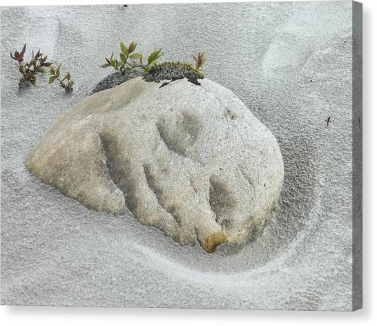 Face In The Sand At Baird Glacier Outwash Canvas Print