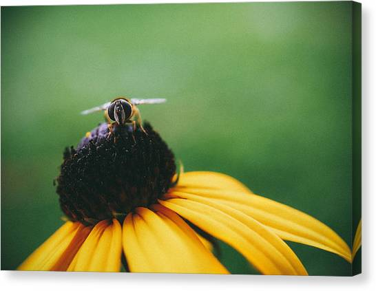 Sunflower Canvas Print - Face Of A Bee by Tracy  Jade