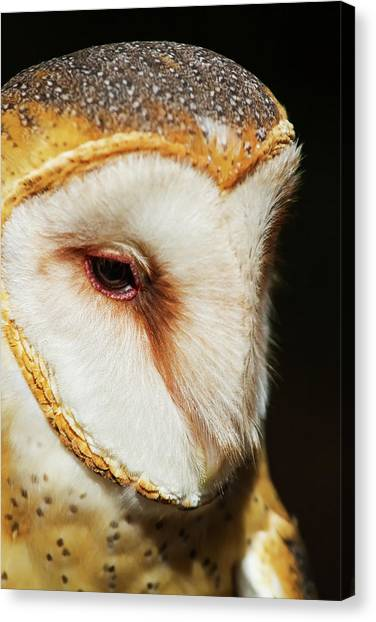 Face Of Athena Canvas Print