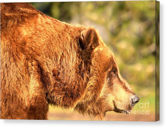 Bear Claws Canvas Print - Face Of The Kodiak by Adam Jewell