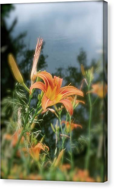 Faded Lily Canvas Print