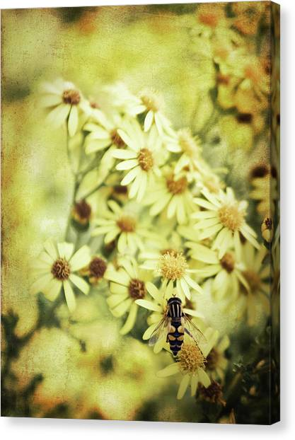 Faded Summer Canvas Print