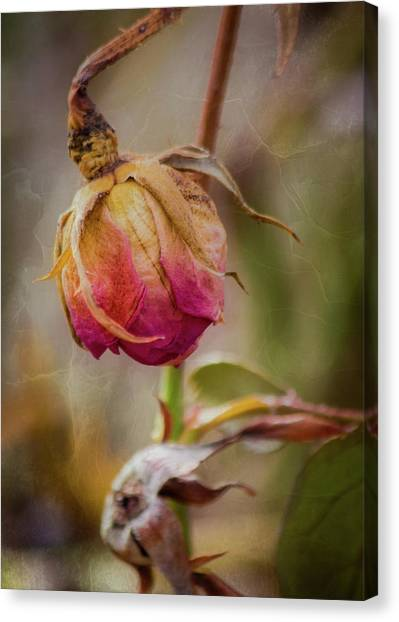 Fading Color Of Summer Canvas Print