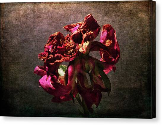 Canvas Print featuring the photograph Fading Glory by Randi Grace Nilsberg