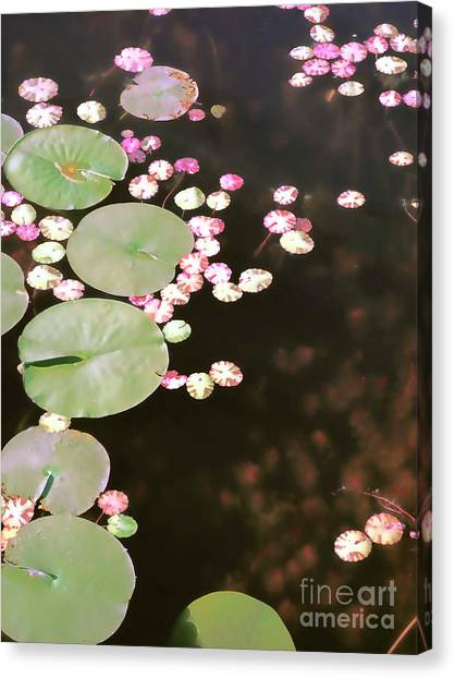 Fading Lily Pads Canvas Print