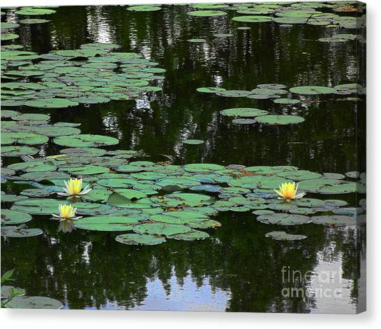 Fairmount Park Lily Pond Canvas Print