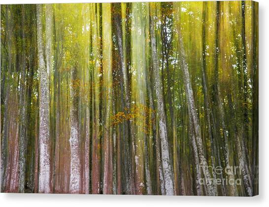 Fairy Forest I Canvas Print