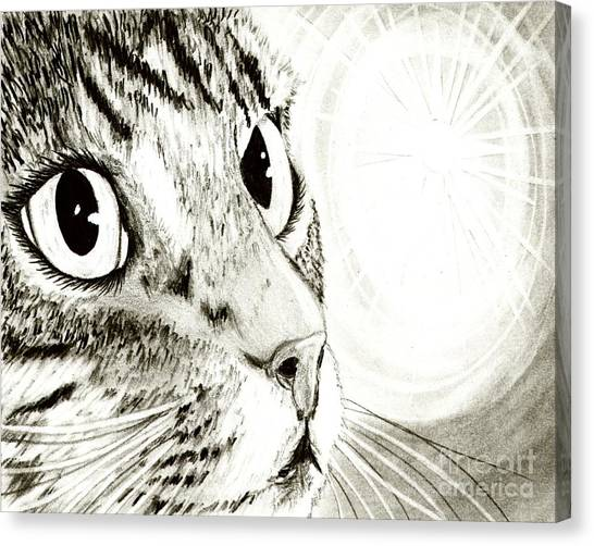 Fairy Light Tabby Cat Drawing Canvas Print