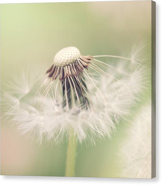 Fairy Parasol Canvas Print