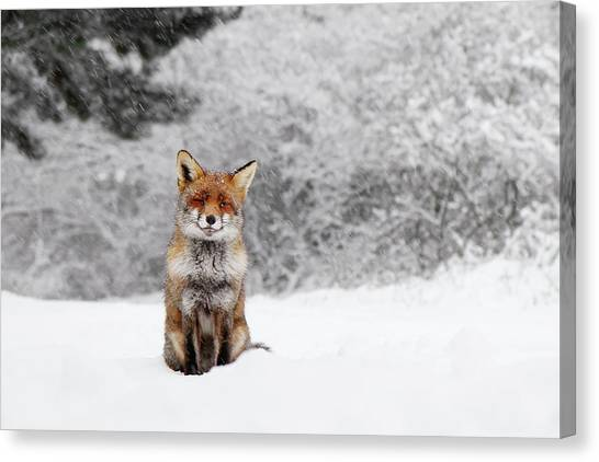 Carnivore Canvas Print - Fairytale Fox IIi - Red Fox In The Snow by Roeselien Raimond