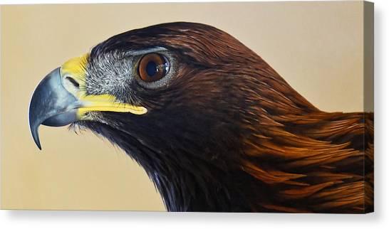 Falconer's Hawk - Harris Hawk Canvas Print
