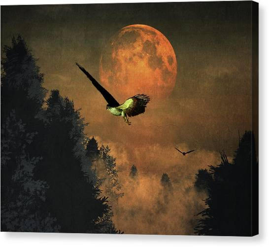 Falcons Hunting In The Evening Canvas Print