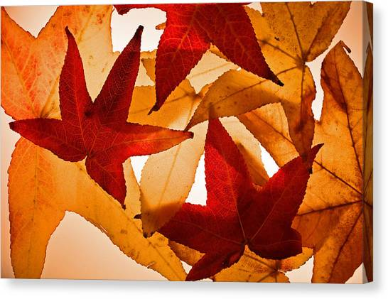 Fall 002 Canvas Print by Bobby Villapando