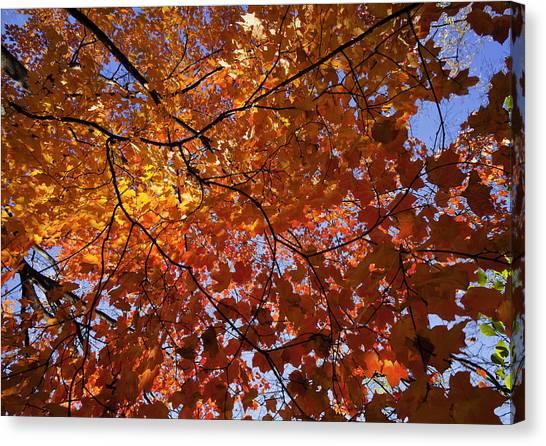 Fall 2010 14 Canvas Print