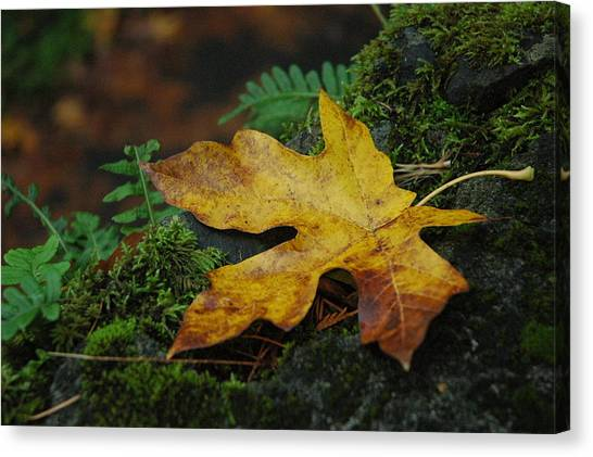 Fall Alone Canvas Print by Lori Mellen-Pagliaro
