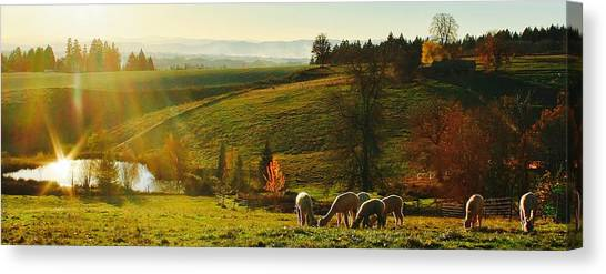 Fall Alpaca Farm Canvas Print