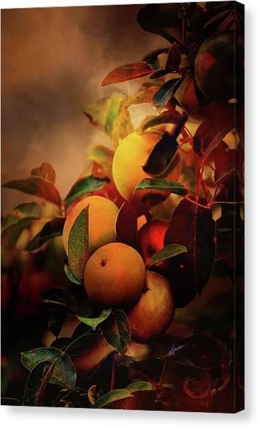 Fall Apples A Living Still Life Canvas Print