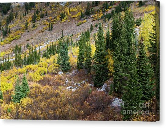 Great Falls Of Yellowstone Canvas Print - Fall Aspens And Evergreen Trees by Mike Cavaroc