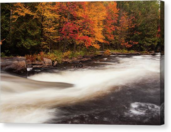 Fall At Oxtongue Rapids Canvas Print