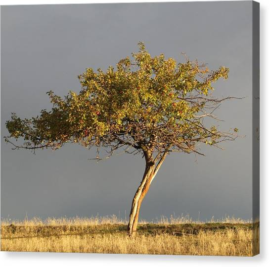 Fall At The Crabapple Tree Canvas Print