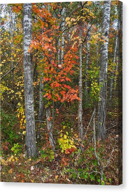Canvas Print featuring the photograph Fall Color At Gladwin 4543 by Wesley Elsberry